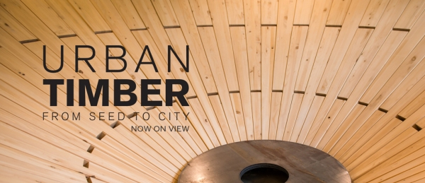 urban timber logo
